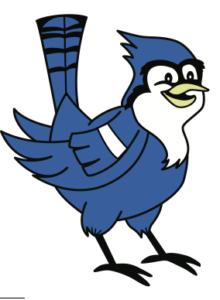 Soren the Blue Jay